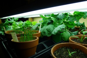 seedlings_021613
